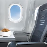 Доставка животных в кабине самолёта